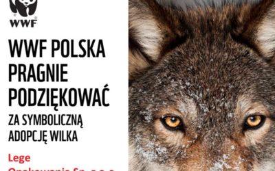 Certyfikat Adopcji Wilka
